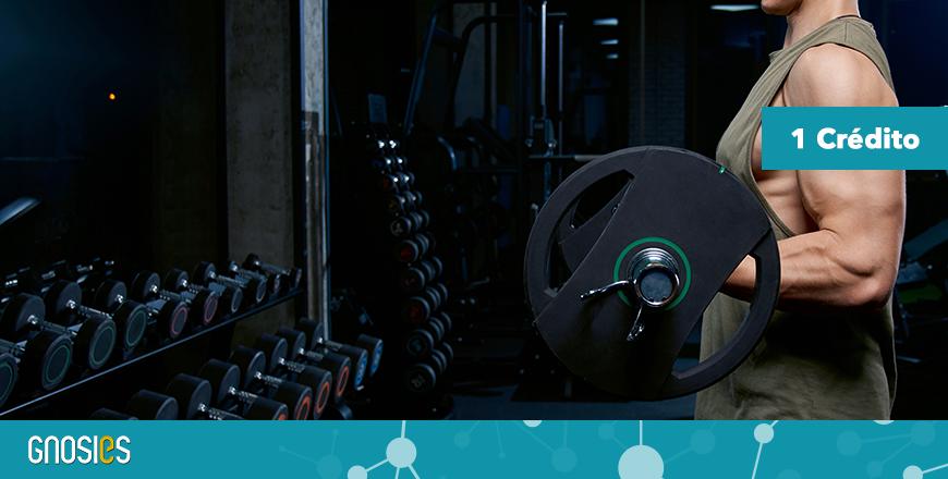 Formação Gnosies - Treino Hipertrófico - Técnicos Exercício Físico e Treinadores de Desporto